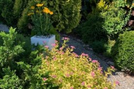 ogród villa marina dąbki